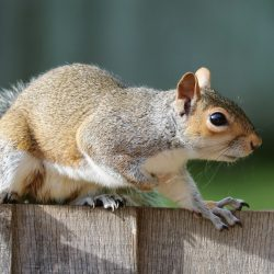squirrel-1401509_1920